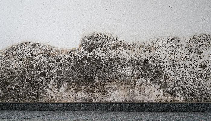 mold inspections fairfax county va